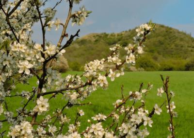 Mnichov Oblik jaro